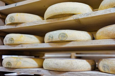 creamery: Pile of aging Cheese on wooden shelves in ripening cellar in Franche Comte dairy in France