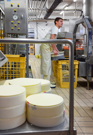 creamery: Evillers, France - August 31, 2016: Process of putting Gruyere de Comte Cheese in the forms in the dairy in Franche Comte, Burgundy, in France. Editorial