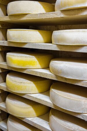creamery: Pile of aging Cheese on wooden shelves at ripening cellar of Franche Comte creamery in France
