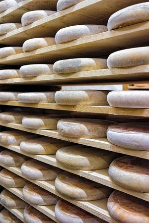 creamery: Rows of aging Cheese on wooden shelves in maturing cellar of Franche Comte creamery in France