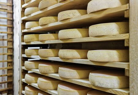 creamery: Rack of aging Gruyere de Comte Cheese on wooden shelves at maturing cellar in Franche Comte creamery in France