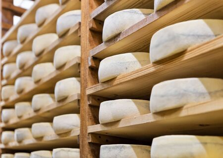 creamery: Pile of aging Cheese on wooden shelves at maturing cellar in Franche Comte creamery in France Stock Photo