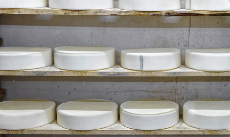 creamery: Shelves of young Conte Cheese on wooden shelves in maturing cellar of Franche Comte creamery in France Stock Photo