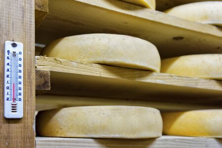 creamery: Shelf of aging Cheese on wooden shelves at ripening cellar of Franche Comte creamery in France Stock Photo