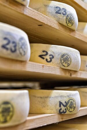 creamery: Stack of aging Cheese on wooden shelves in maturing cellar in Franche Comte creamery in France Stock Photo