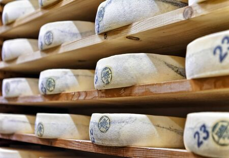 creamery: Wheels of aging Cheese on wooden shelves in ripening cellar of Franche Comte dairy, in France