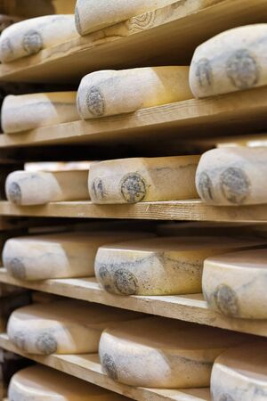 creamery: Wheels of aging Cheese on wooden shelves in maturing cellar in Franche Comte creamery, in France
