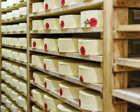 creamery: Wheels of young Cheese on wooden shelves at ripening cellar of Franche Comte creamery in France Stock Photo