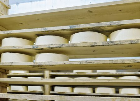 creamery: Wheels of young Cheese on wooden shelves in maturing cellar of Franche Comte creamery in France