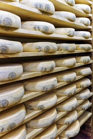 creamery: Wheels of aging Cheese on wooden shelves in maturing cellar of Franche Comte creamery in France