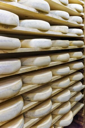 creamery: Wheels of aging Cheese on wooden shelves at maturing cellar of Franche Comte creamery in France