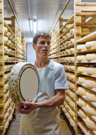 creamery: Evillers, France - August 31, 2016: Worker holding a wheel of Gruyere de Comte Cheese in ripening cellar in Franche Comte creamery in France
