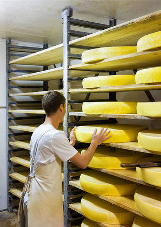 creamery: Evillers, France - August 31, 2016: Worker at ripening cellar with aging Gruyere de Comte Cheese on wooden shelves in Franche Comte creamery in France