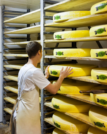 creamery: Worker in ripening cellar with aging Gruyere de Comte Cheese on wooden shelves in Franche Comte creamery in France