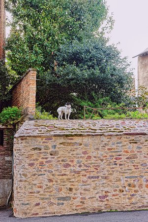 Little dog in the streets of Rennes, Brittany region of France. Stock Photo