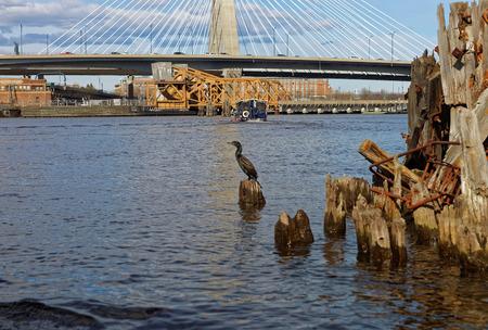 wharf: Black Gannet at Charles River and Leonard P Zakim Bunker Hill Memorial Bridge in Boston, Massachusetts, USA.