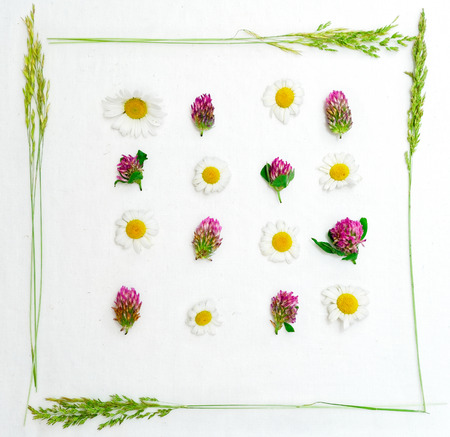 trifolium: Frame of field flowers, such as clover and chamomile and field grass on the white background. Flat lay.