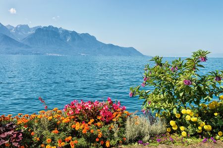 montreux: Flowers blossoming in the embankment of Geneva Lake in Montreux, Vaud canton, Switzerland