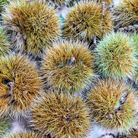 Fresh chestnuts background closeup Stock Photo