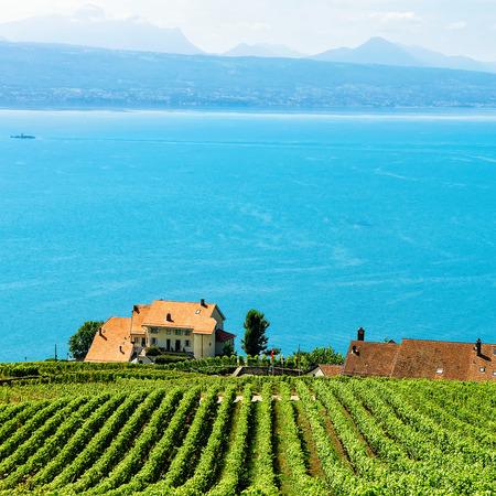 Chalets sur Vineyard Terraces Sentier de randonnée de Lavaux, Lac Léman et montagnes suisses, district de Lavaux-Oron, Suisse Banque d'images - 76050895