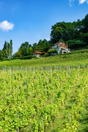 Chalet on Lavaux Vineyard Terraces hiking trail, Lavaux-Oron district in Switzerland Stock Photo
