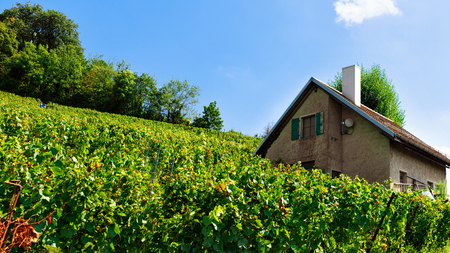 Chalet and Lavaux Vineyard Terraces hiking trail, Lavaux-Oron district, Switzerland Stock Photo