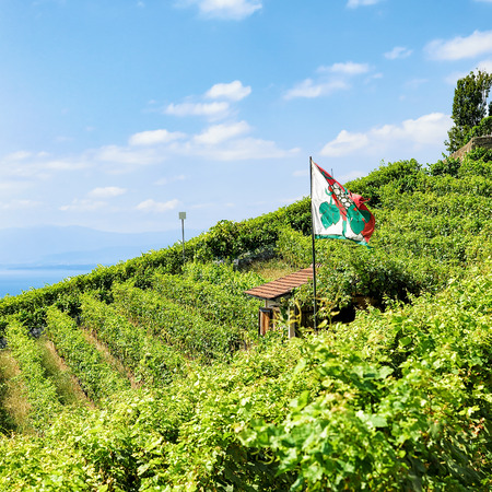 Shelter house with flag on Vineyard Terraces hiking trail of Lavaux, Lake Geneva and Swiss mountains, Lavaux-Oron district, Switzerland Stock Photo