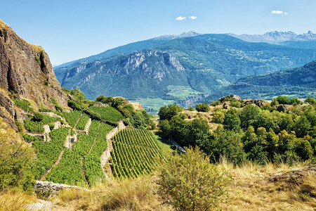 Landscape in Sion with vineyards and Bernese Alps mountains, Canton Valais, Switzerland.