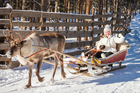 Woman while reindeer sledge ride in winter Rovaniemi, Lapland, Finland Editorial