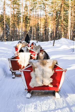 rovaniemi: People in Reindeer sledge caravan in winter forest in Rovaniemi, Lapland, Finland