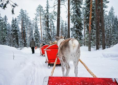 rovaniemi: People in Reindeer sleigh caravan in winter Rovaniemi forest, Lapland, Finland Stock Photo