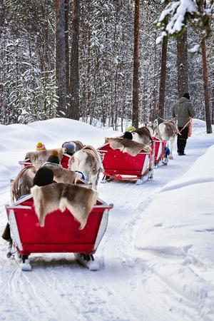 People in Reindeer sled caravan at winter forest in Rovaniemi, Lapland, Finland