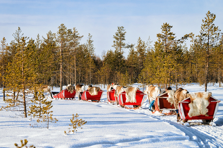 People at Reindeer sleigh caravan in winter forest in Rovaniemi, Lapland, Finland Archivio Fotografico