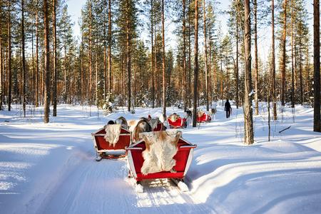 rovaniemi: People at Reindeer sleigh caravan safari in winter forest in Rovaniemi, Finnish Lapland