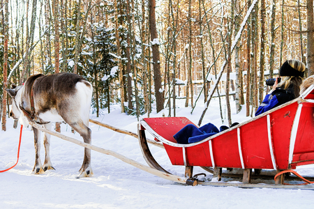 Girl taking photo in Reindeer sledge in winter Rovaniemi, Lapland, Finland
