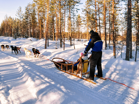 Family riding husky dogs sledge in Rovaniemi, Lapland, Finland