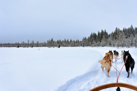 Husky dogs sledges on frozen winter lake in Rovaniemi, Lapland, Northern Finland Stock Photo