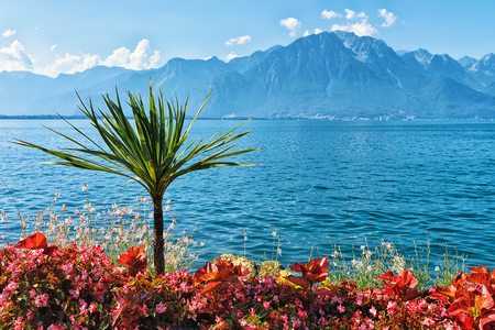 montreux: Plants blooming at the promenade of Geneva Lake in Montreux, Swiss Riviera Stock Photo