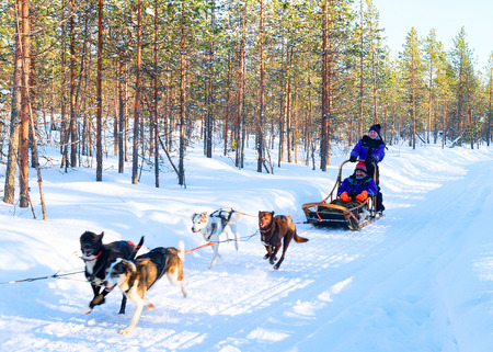 Rovaniemi, Finland - March 5, 2017: Family riding husky dogs sledding in Rovaniemi, Lapland in winter Finland Editorial