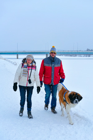 Rovaniemi, Finland - March 2, 2017: People with Saint Bernard dog in winter Rovaniemi, Finland. Editorial