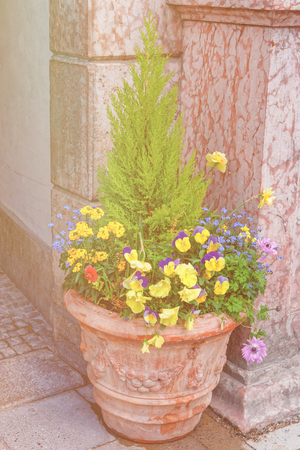 Street flowerbed bowl with blooming yellow and blue garden violet flowers, Munich, Germany. Sunlight toned