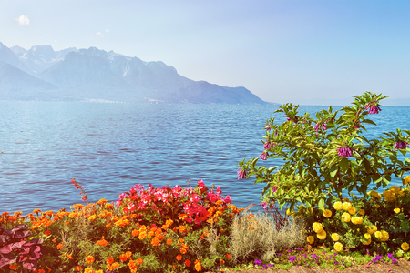 Flowers blossoming in the embankment of Geneva Lake in Montreux, Vaud canton, Switzerland. Sunlight toned