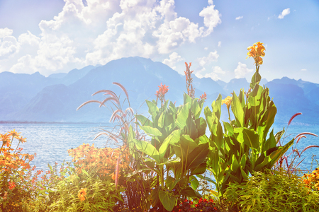 Flowers blossoming at the embankment of Geneva Lake in Montreux, Vaud canton, Switzerland. Summer. Sunlight toned Stock Photo