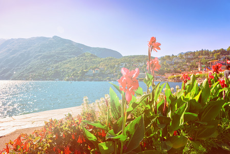Flowers at the Embankment of the luxurious resort in Ascona on Lake Maggiore in Ticino canton in Switzerland. Summer. Sunlight toned