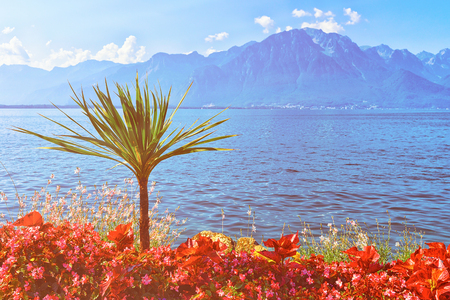 Plants blooming promenade of Geneva Lake in Montreux Riviera, in Switzerland Stock Photo