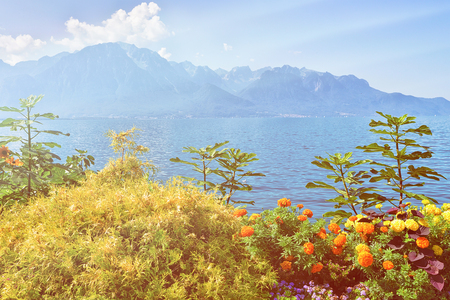 Plants blossom at the promenade of Geneva Lake in Montreux, Swiss Riviera. Sunlight toned