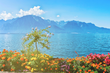 Flowers blooming at the promenade of Geneva Lake in Montreux, Vaud canton, in Switzerland