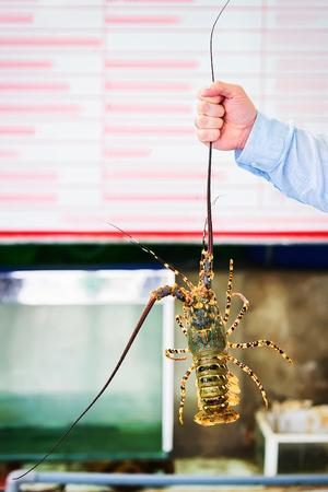 Lobster in the hand in Danang, Vietnam Imagens - 101886911