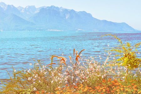 Plants bloom at the promenade of Geneva Lake in Montreux, Swiss Riviera. Sunlight toned