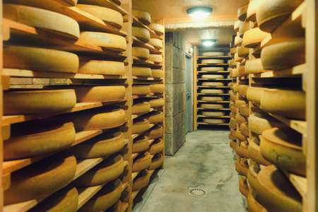 Shelves of aging Cheese on wooden shelves at ripening cellar in France, Franche Comte dairy